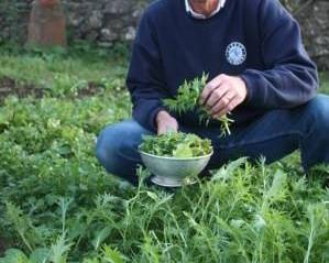 Alan Down holding a colander picking winter salad leaves