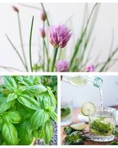 Spearmint & Basil & Organic Chive Seeds Bundle (Free Postage)