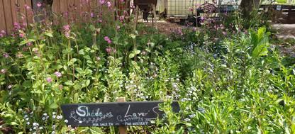 Wild flowers at Grow Wilder/Feed Bristol