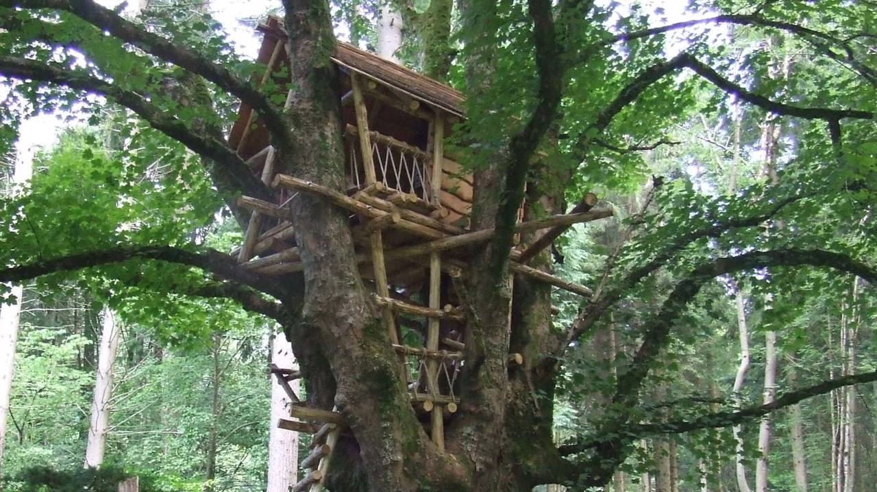 Treehouse at Nant y Bedd garden