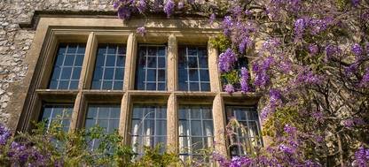 A building with a purple flower