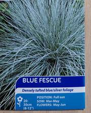 Suttons Blue Fescue Seeds