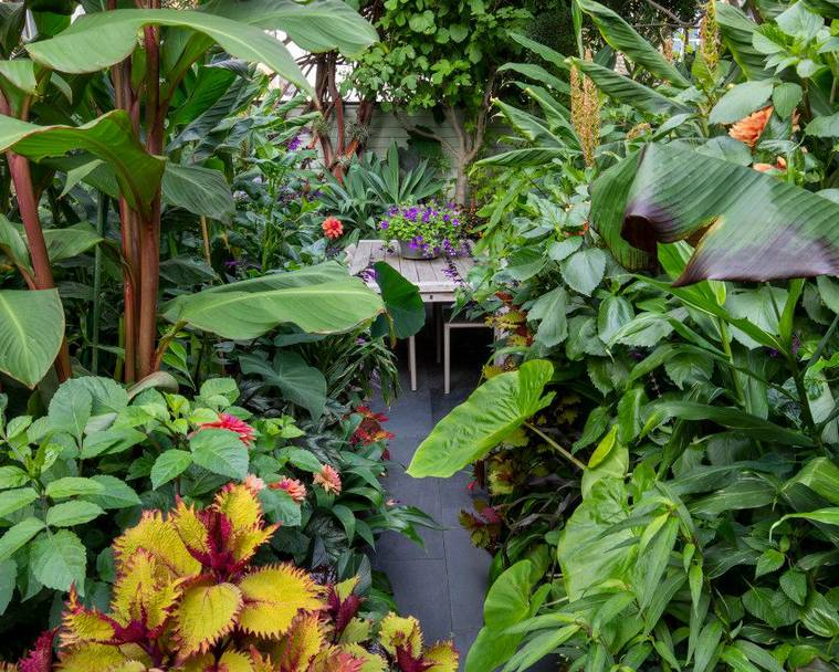 The Frustrated Gardener's lush subtropical garden in Kent