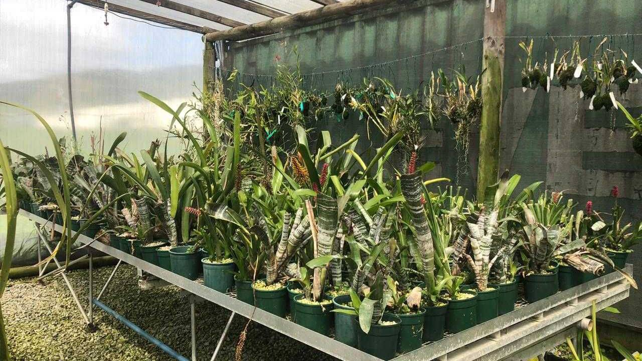 A group of people standing in a greenhouse