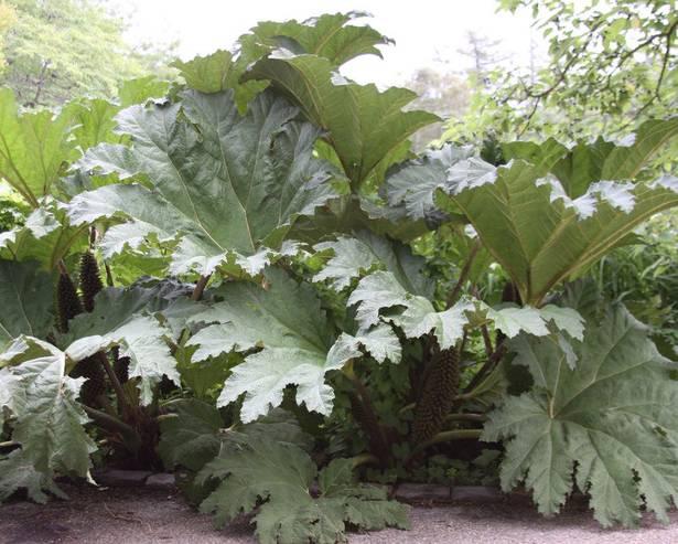 Large Leaf Plants Discover Candide Gardening