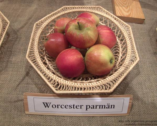 A picture of a Apple 'Worcester Pearmain'