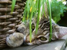 A cat among green house plants