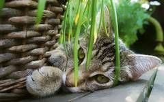 A-Z List of Houseplants Poisonous to Cats