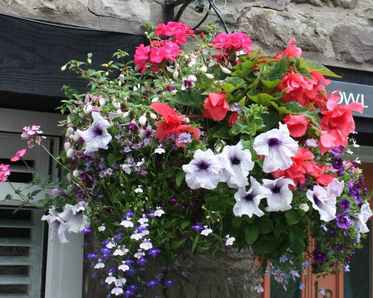 A hanging basket full of flowers