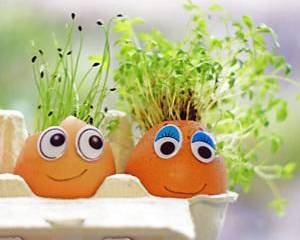How To Plant a Cress Head - Discover | Candide Gardening