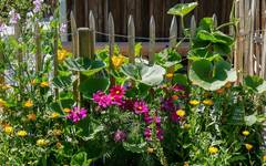 Making a Safe and Inviting Bee Garden
