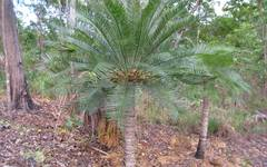 A photo of Fern Palm
