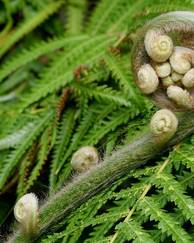 A photo of Ferns