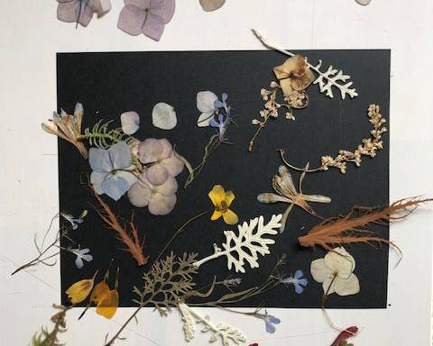 Making art from pressed flowers