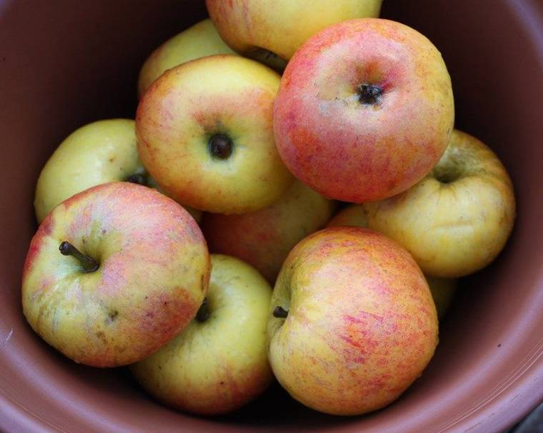 A bowl of apple fruits
