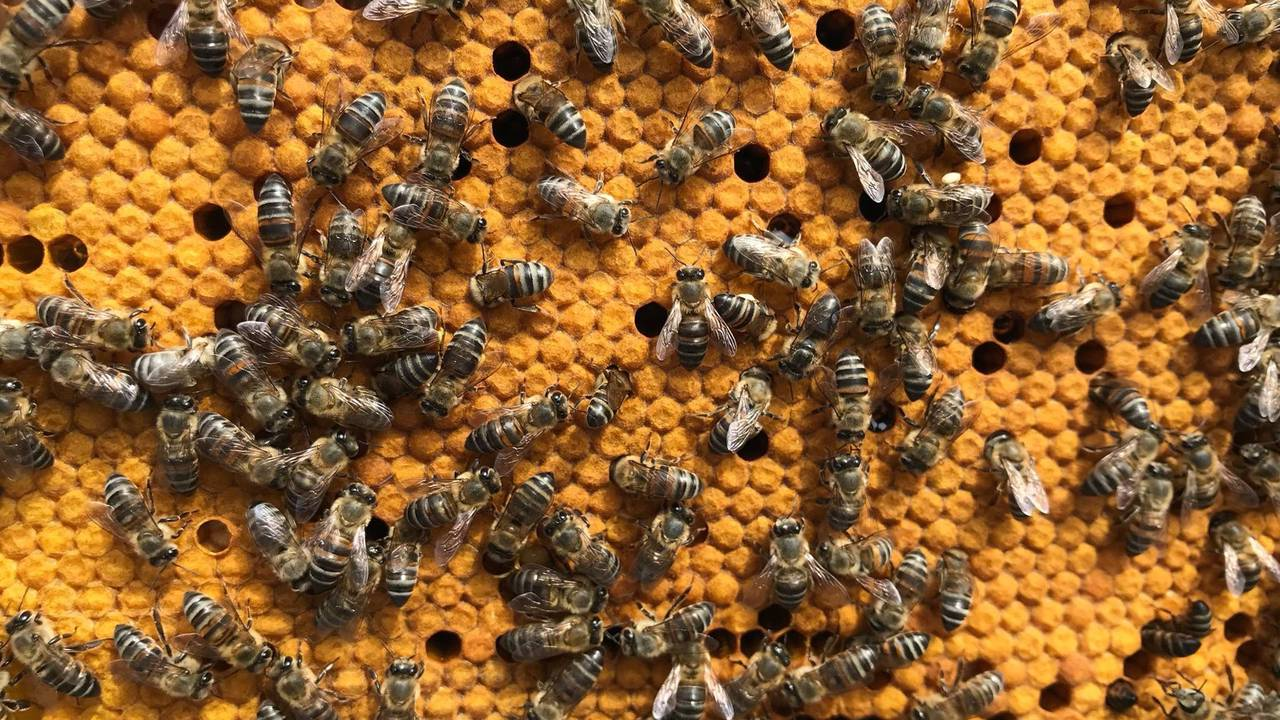 A group of honeycomb