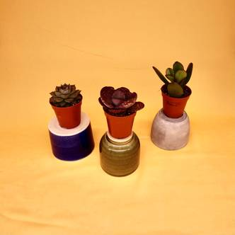×3 Succulent Mini Mix Selection - 5cm pot