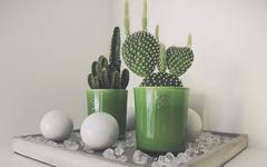 How To Look After Cacti