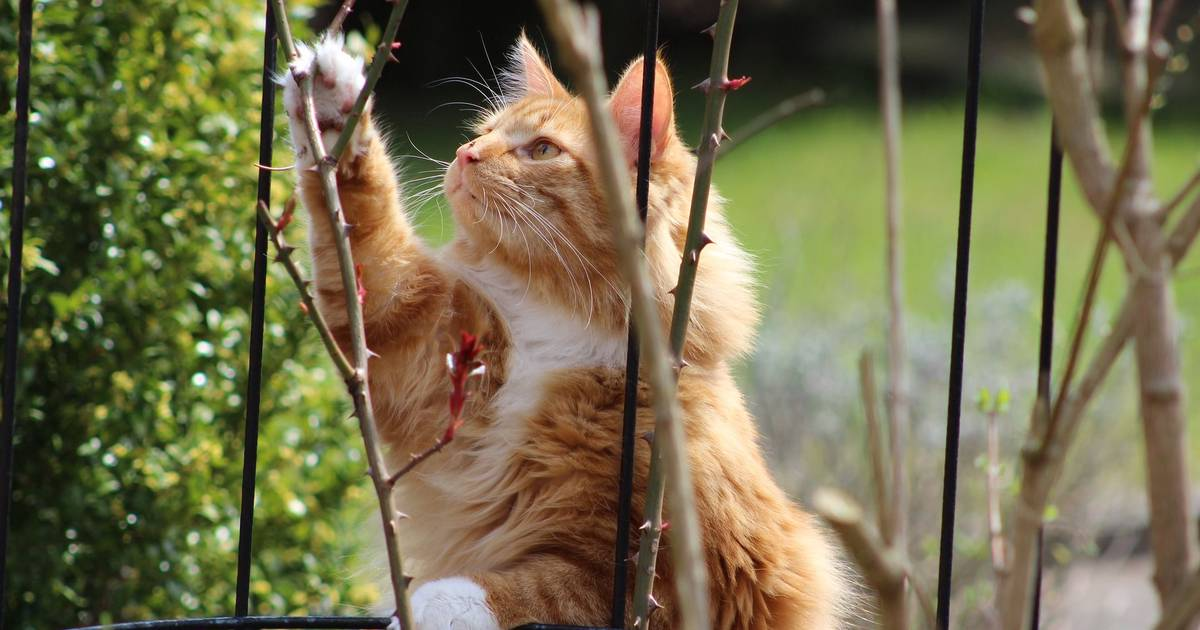 Candide Community Questions Answered: Cat-Safe Plants ...