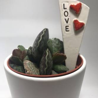 Love message for loved ones when gifting plants.