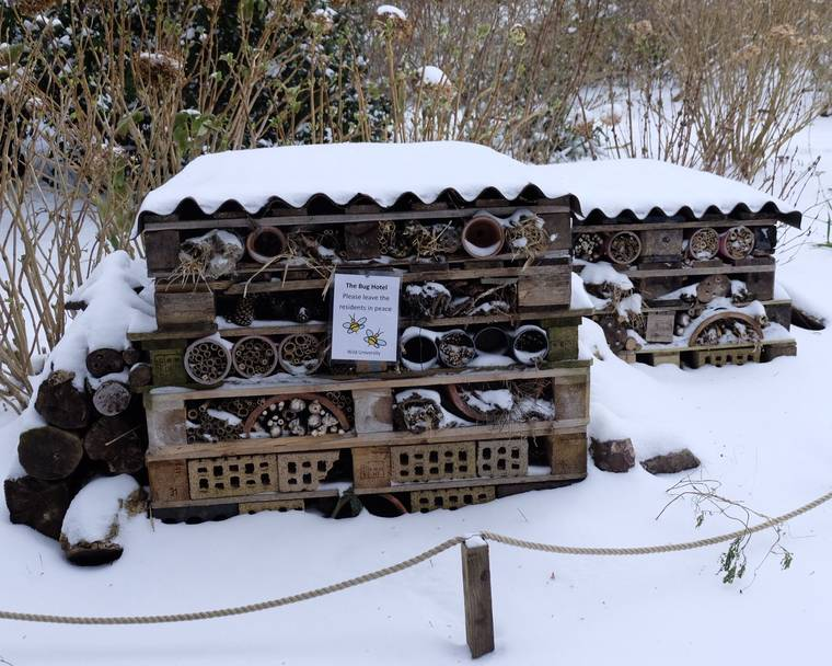 A bug hotel covered in snow