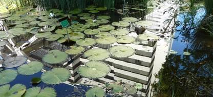 A close up of a pond
