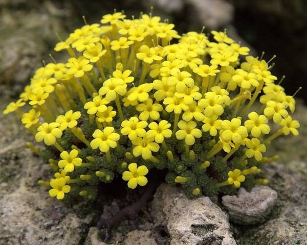 A picture of a Dionysia