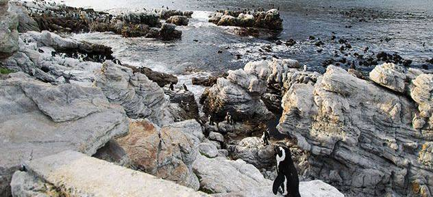A penguin standing on a rock