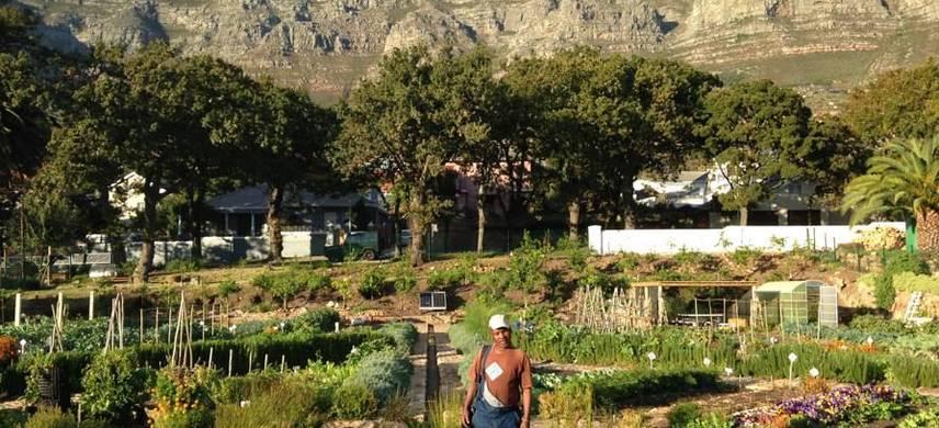 A person in a garden