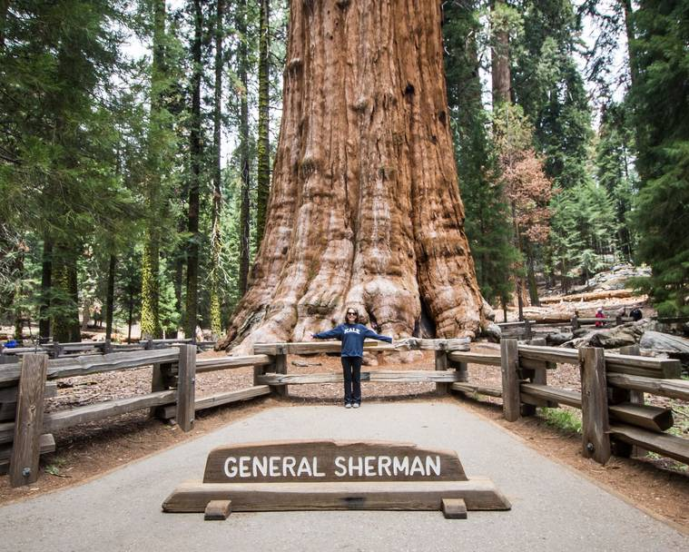 A woman standing in front of General Sherman, the largest tree in the world, for scale