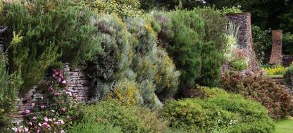A group of bushes and trees