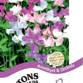 Suttons Sweet Pea Seeds Amethyst and Orchids