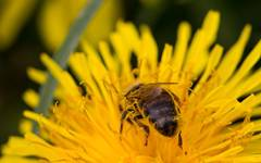 Spring Blooms for Pollinators – Top 20