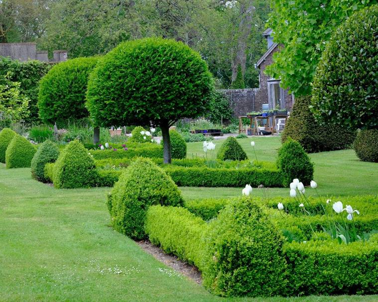 Topiary trained evergreen plants