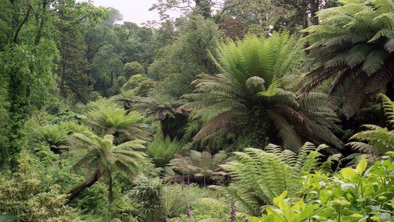 A green plant in a forest with Lost Gardens of Heligan in the background